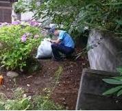 庭の雑草取り